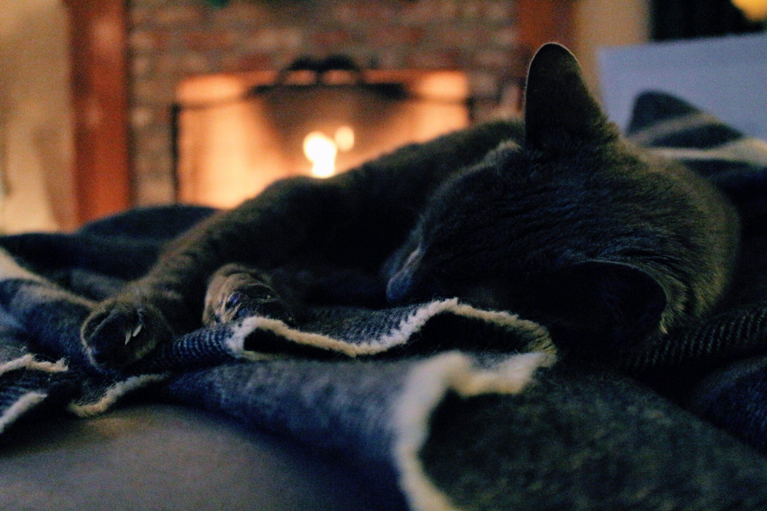 Katt og peiskos